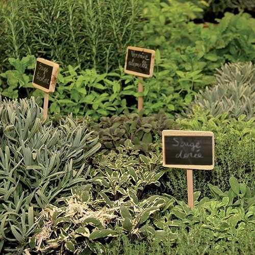les herbes aromatiques bio en cuisine marseille. Black Bedroom Furniture Sets. Home Design Ideas